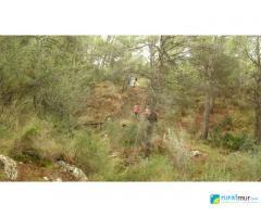 Cuevas del Buitre y Finca Naveta