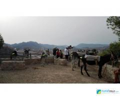 Excursiones y rutas de senderismo con burros
